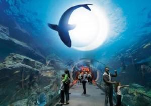 Океанариум Underwater Zoo в Дубай Молл.